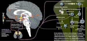 efecto-placebo-milagros-de-la-mente-3129